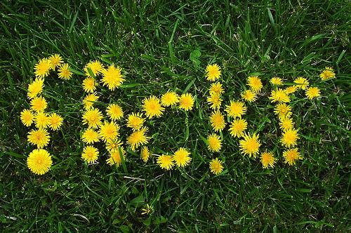 Как Правильно Публиковать Фото с Flickr.com на Свой Блог